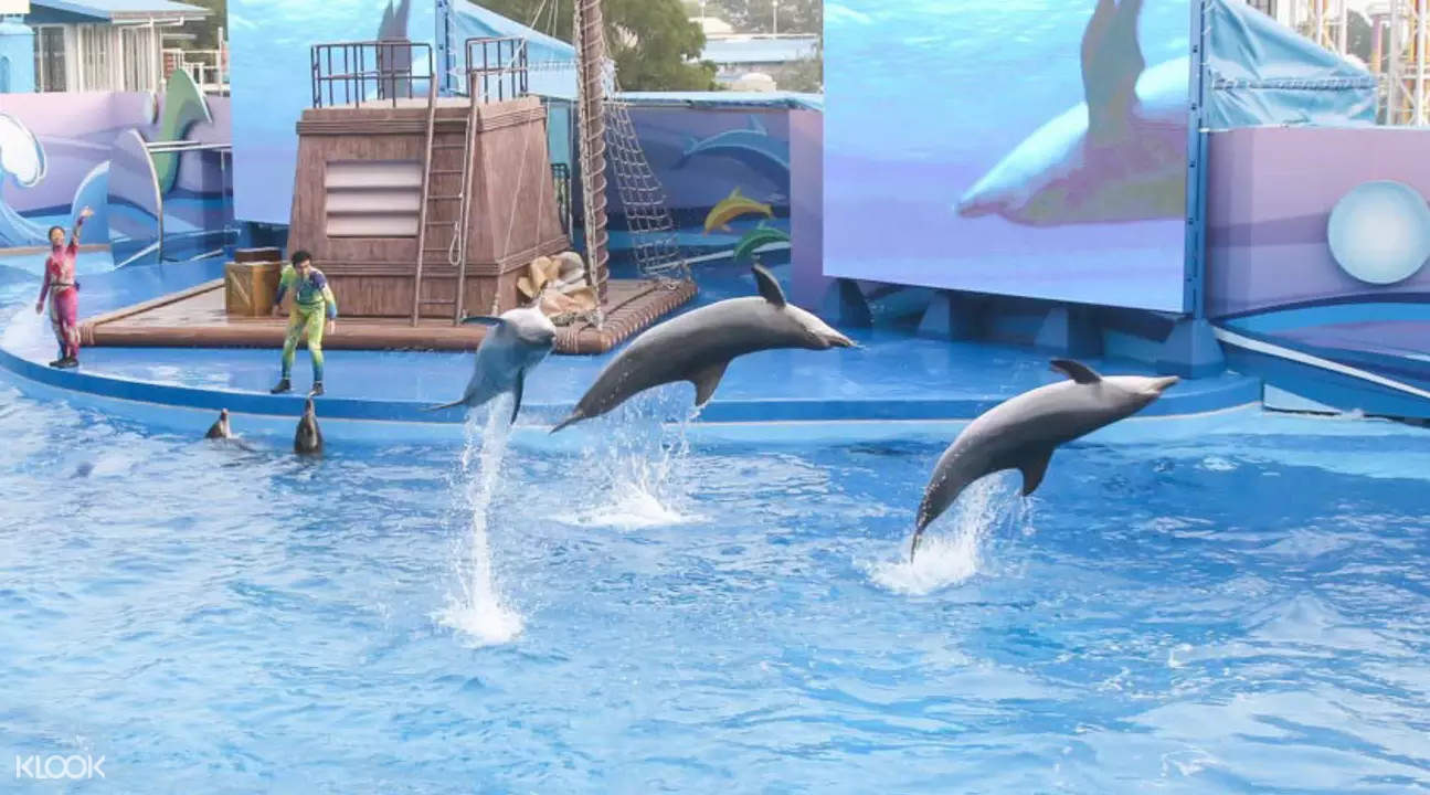 dolphins performing in ocean park hong kong